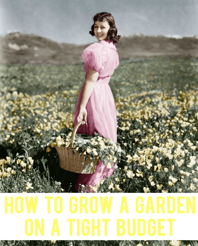 How to Grow a Garden On a Tight Budget | AndThenWeSaved.com
