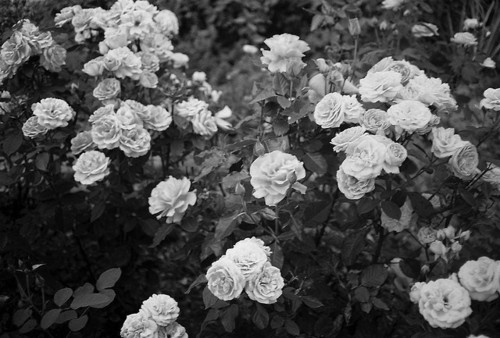 balck and white flower bed