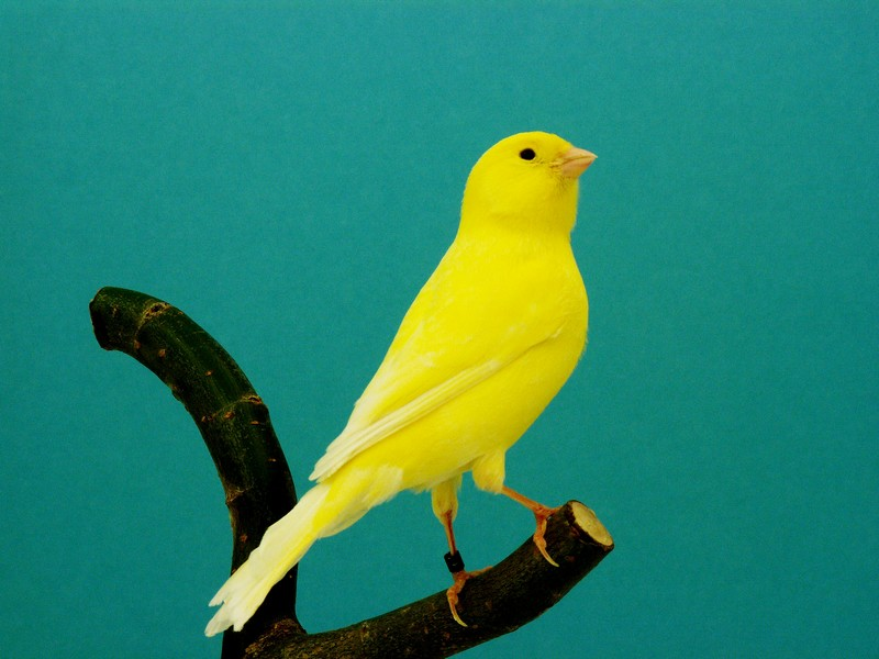 yellow bird on branch