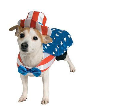dog in usa flag costume